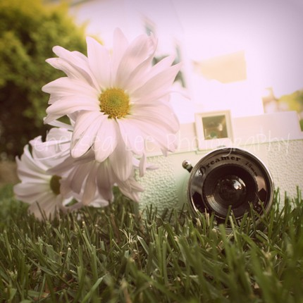 Chelsea Lee Photography